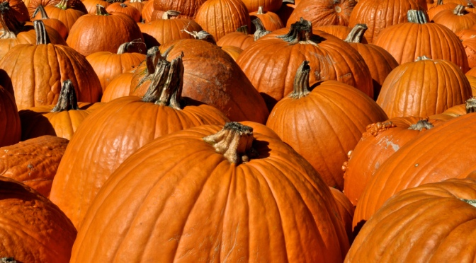 Your Guide to Edmond Area Pumpkin Patches and Fall Festivals